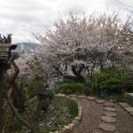 茶道教室庭園6