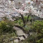 茶道教室庭園2