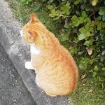宗像大社猫
